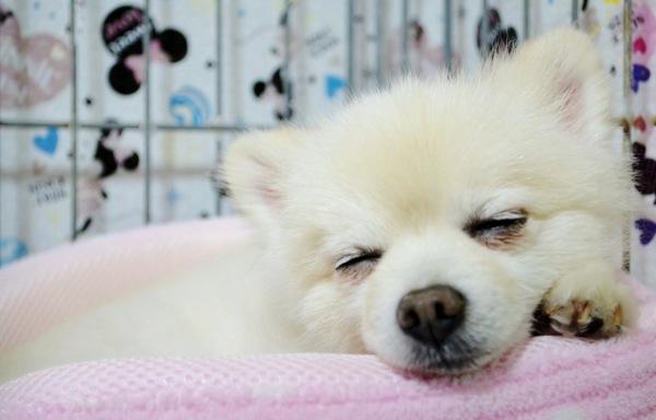 犬のほんわかする話【9連発】