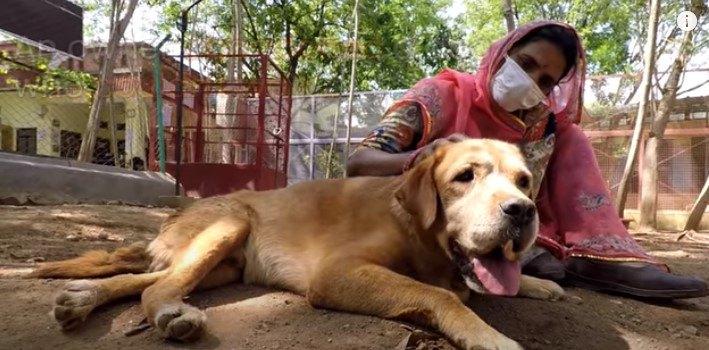 歩けなくて捨てられた犬プンバを救済