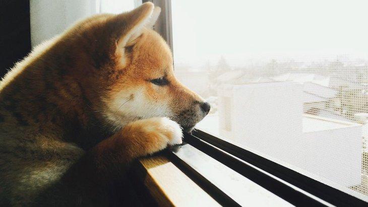 飼い主が外出する時に愛犬が考えている『3つの不安』