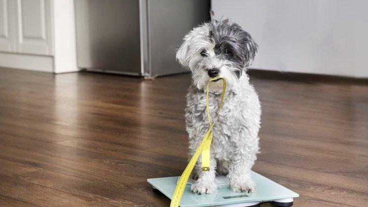 犬が生活習慣病になる原因とは?症状から対処法まで