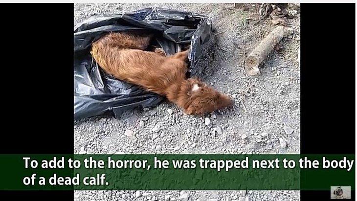 足を縛られごみ袋に入れられて川に投げ捨てられた犬
