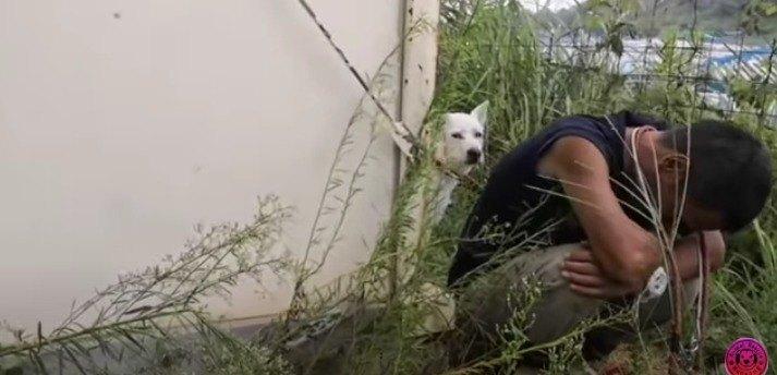 【危険!】攻撃的に牙をむく紀州ミックス犬の家庭犬化トレーニング