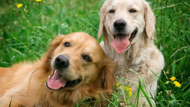 「楽観的な犬」と「悲観的な犬」 それぞれの特徴とは?