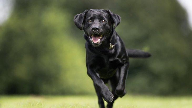 犬は『人間の病気』を嗅ぎ分けることができる?!スゴイ能力を持った犬たち2選