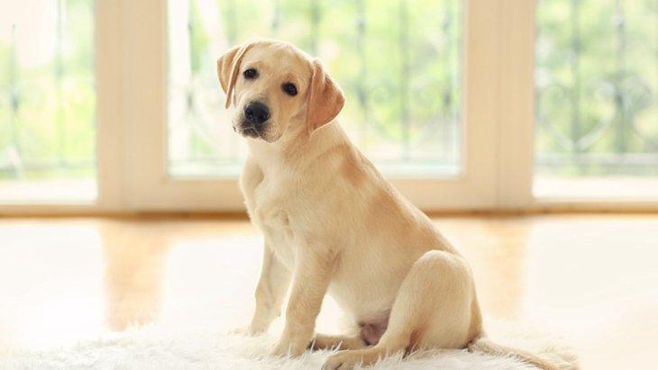 人の犬を預かることになったら~注意点と確認しておきたいこと