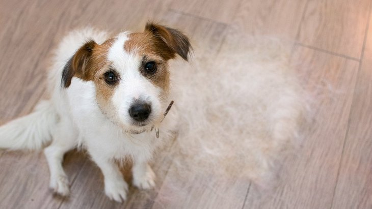 なぜ「毛が抜けにくい犬」と「毛が大量に抜ける犬」がいるの?違いは?