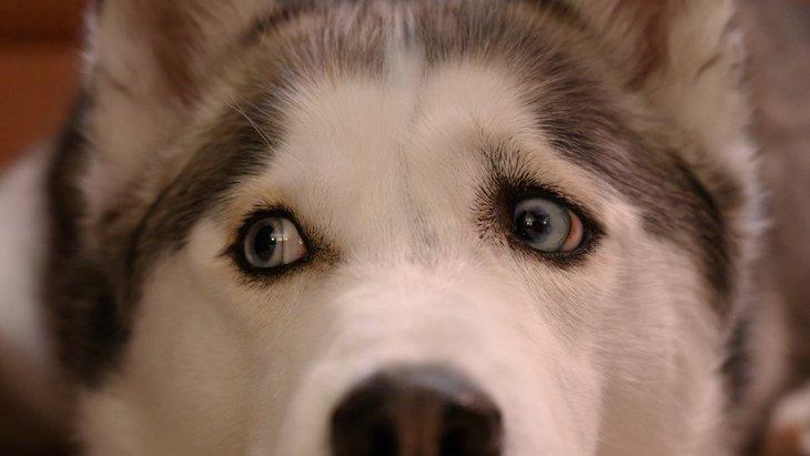 犬にNGな『間違った愛情の伝え方』3選!こんな愛情表現は愛犬にとっては苦痛かも…?