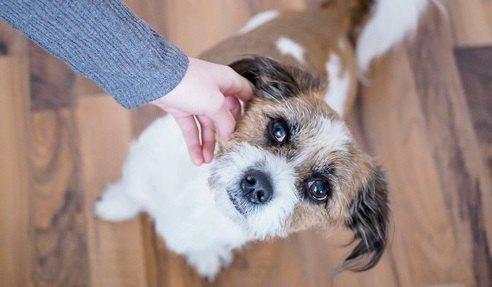 英国で犬に咬まれて怪我をした大人が過去20年で3倍に増加【研究結果】