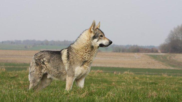 フンの化石が教えてくれる古代の犬の食生活