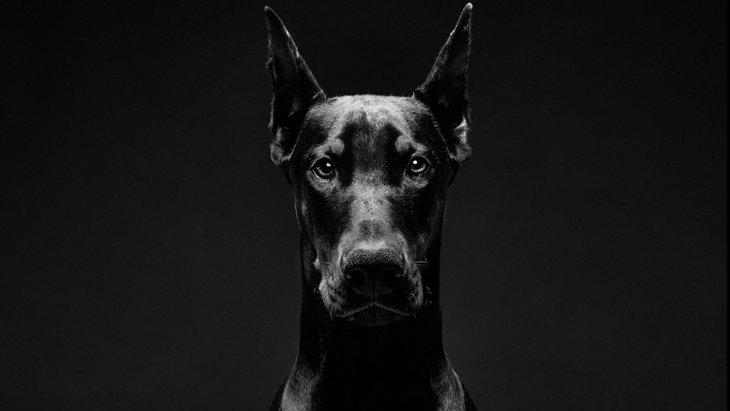 最も凶暴な本能を持つ危険犬種5選