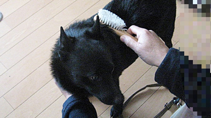 体のケアだけでなく、シニア犬へ心のケアを