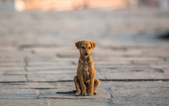 犬の面倒を見ないで放置するリスク7つ
