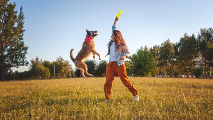 犬が賢くなる『遊び方』3選!コツや注意すべきポイントを解説