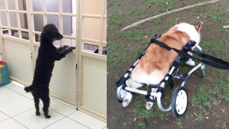 『神ってる犬』大賞!