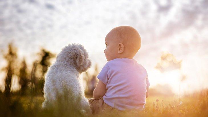 犬と赤ちゃんが同居するメリットとデメリット!気を付けたいポイントまで