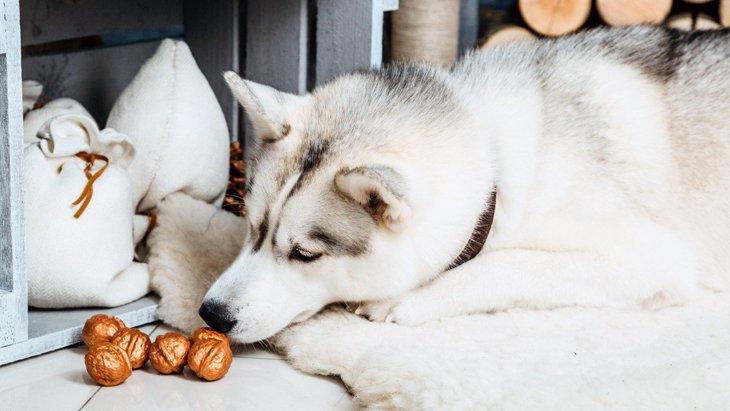 犬に絶対に食べさせてはいけない『ナッツ類』3選!最悪死に至る可能性も!