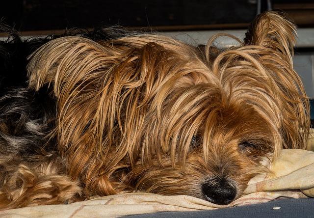 犬の子宮蓄膿症が食欲低下の原因だった!