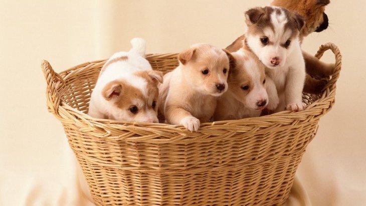 犬の値段について。犬種による平均価格の違いや、高い・安い場合の理由