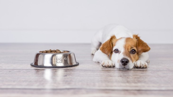 犬が『ご飯を食べたくない』と言っている時にする仕草や行動4選