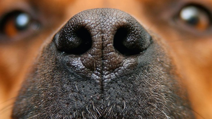 「ブーブー」「クンクン」犬が鼻を鳴らす時の心理11個