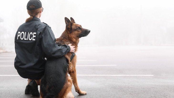 『犬の仕事の年収』はいくら?トリマーやドッグトレーナーのお給料は?