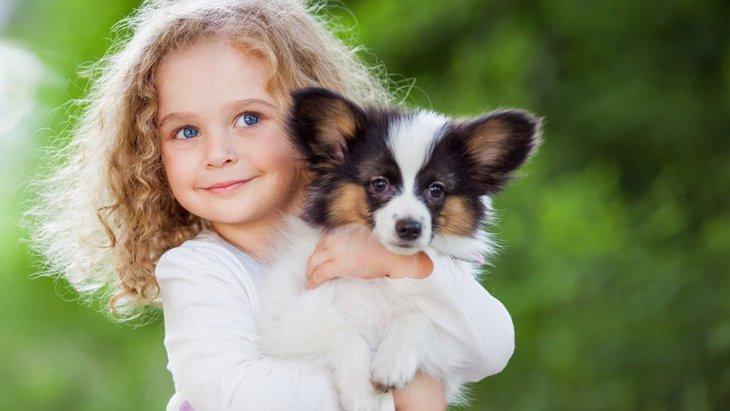 犬の飼い方やしつけ方!子犬を初めて迎え入れる人が知っておくべき基本知識