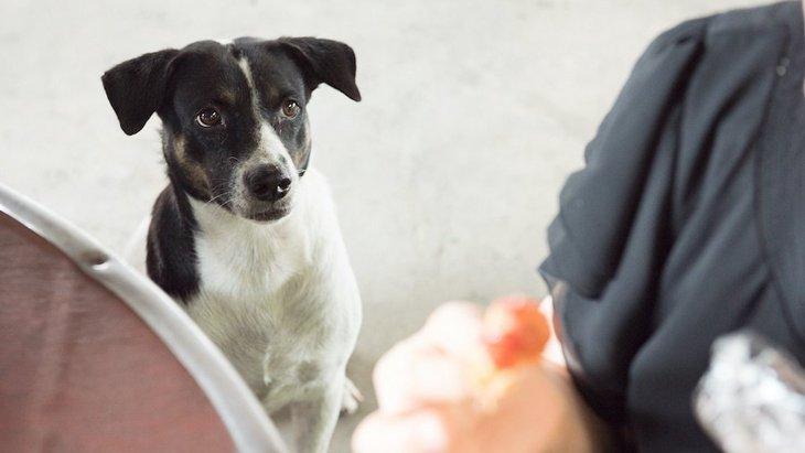 犬が食事中の飼い主をじっと見る時の心理3つ