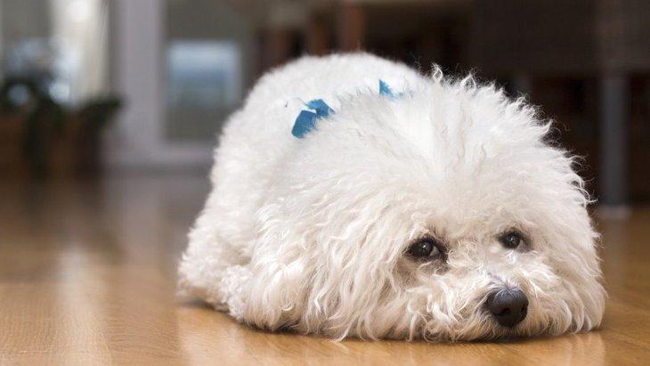 犬が『痛みを我慢している時』にする仕草や行動7選