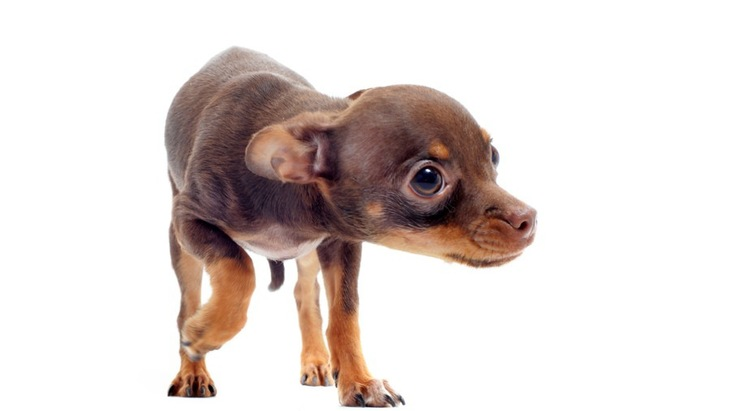 怖がる犬を安心させる4つの方法