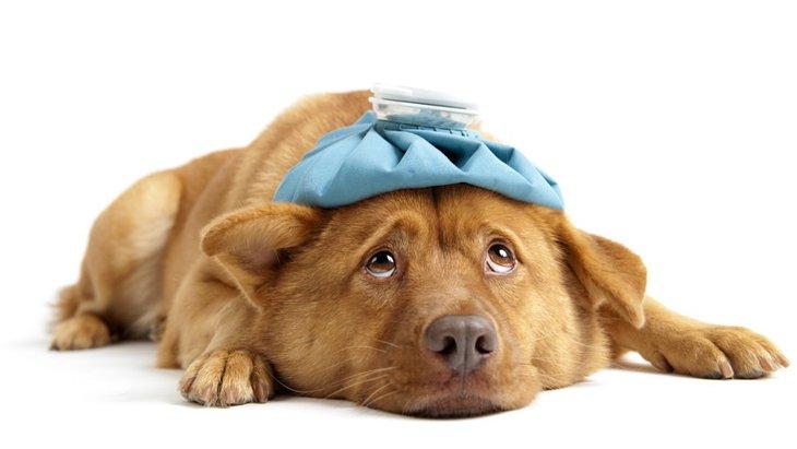 犬の尿崩症について その症状や原因、治療方法
