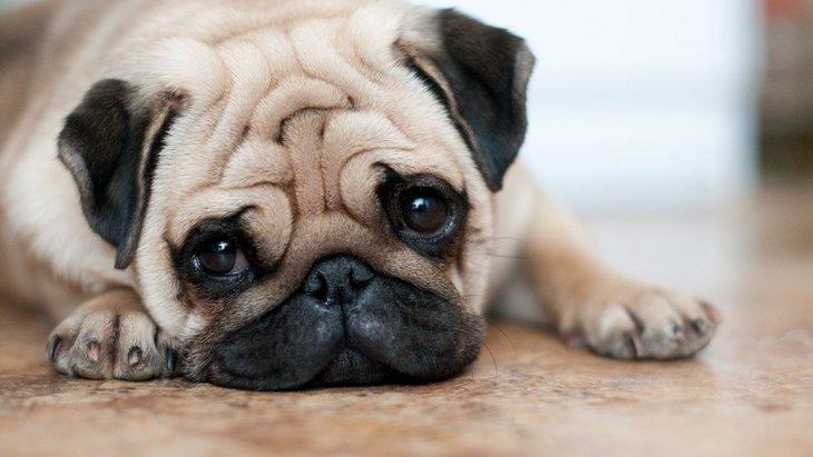 犬のおならが臭い原因とは?考えられる病気や対策について