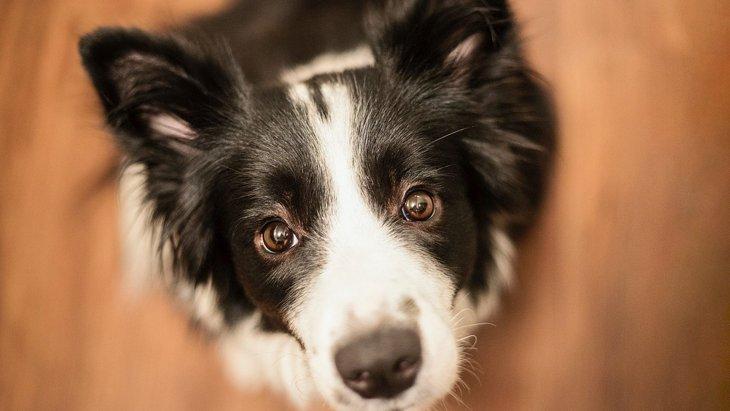 犬が『遊んでほしい』と飼い主に伝えてるときの仕草4つ