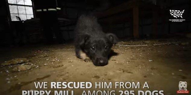 不潔な環境で栄養失調、日光不足のため歩けなかった子犬を救出。すると…