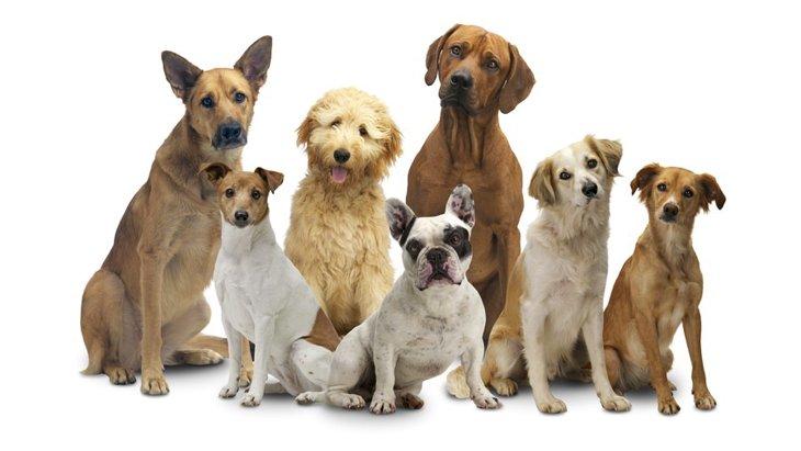 【犬の豆知識】犬は10のグループに分類されているって知ってた?
