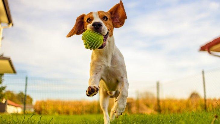 犬が遊びに誘っても乗ってくれない時の心理4選