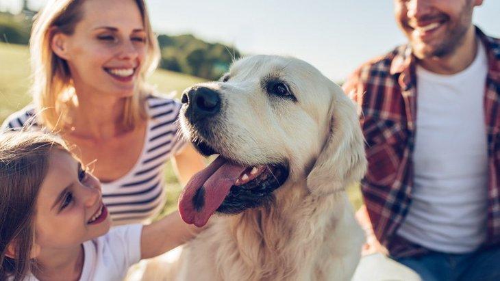 『家族の絆』が生まれている時に犬がする5つの行動や仕草