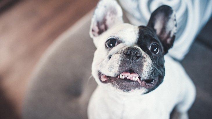 犬がしゃくれてる!主な原因や不正咬合のデメリット、治療法まで
