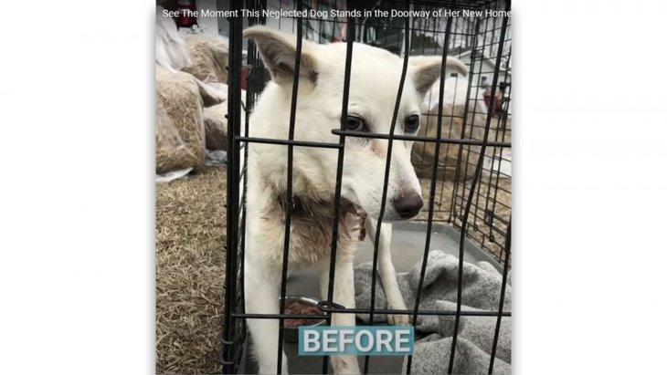 食い込んだ首輪は皮膚を裂いた。保護した犬のビフォー・アフターに涙