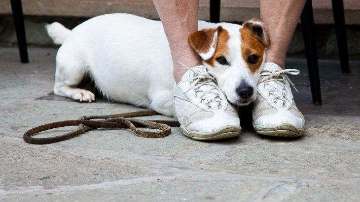 犬の怖がりは克服できない!?大切なのは「見極め」と「理解」