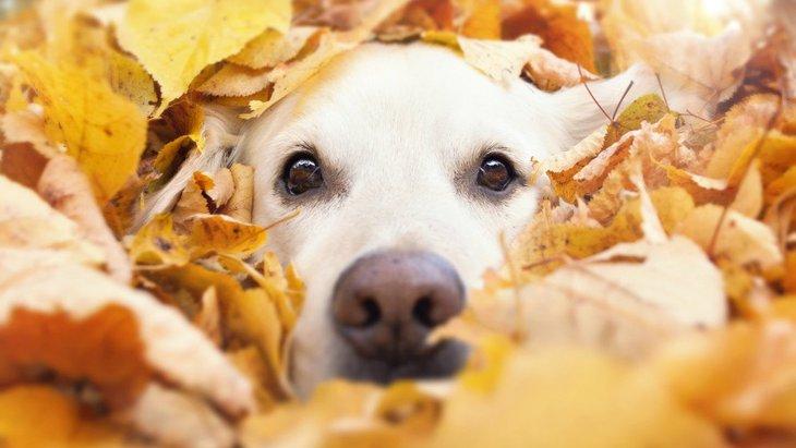犬の鼻血の原因!注意したい症状や病気、対処方法まで