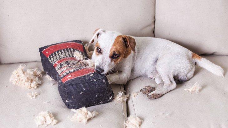 犬が見せる『嫉妬サイン』4選!こんな仕草をしていたらやきもちを妬いているのかも…!