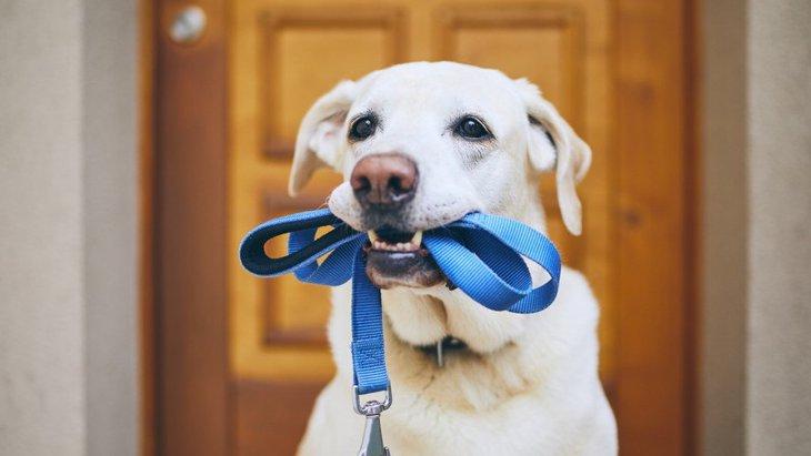 犬が散歩を催促している仕草や行動5つ