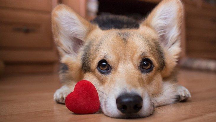 犬が喜ぶ飼い主さんとのコミュニケーション3つ