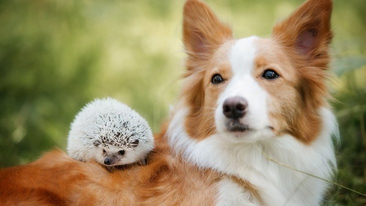 犬と小動物は仲良く暮らせる?ハリネズミ・インコ・うさぎとの相性は?