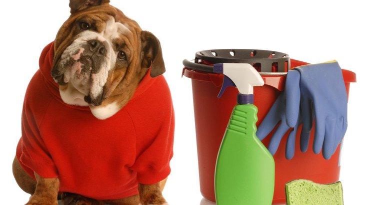 犬の臭いの原因と対策、消臭する方法とは