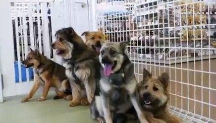 保護犬の兄弟達が大集合!男の子メンバーも集合すると…?