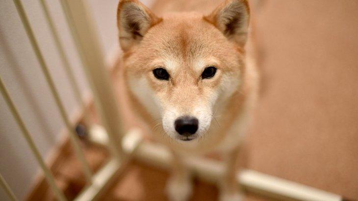 犬が飼い主の外出時に考えている6つのこと