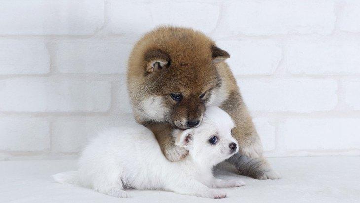 犬が他の犬をイジメている時にしている行動2選!適切な対処法は?