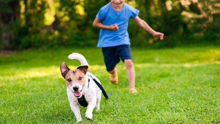 子供がやりがち!犬を追いかけまわすのがNGな理由2つ