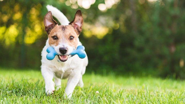 犬が好きになる『おもちゃの特徴』4選!なぜおもちゃにも好き嫌いがあるの?